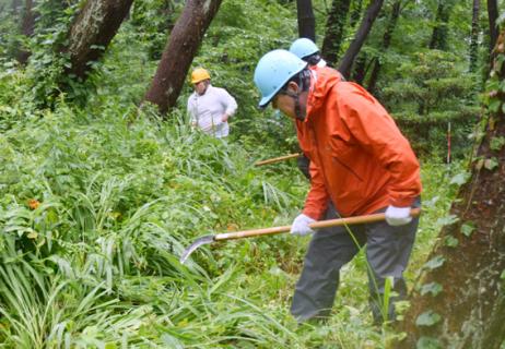 砂防林の下草刈りに精を出す参加者たち