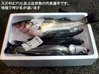 スズキはブリと並ぶ出世魚の代表選手です。地域で呼び名が違います 出世魚とは、稚魚から成魚まで成長